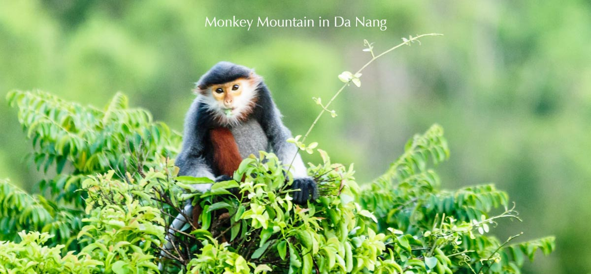 Son Tra peninsula – Monkey Mountain