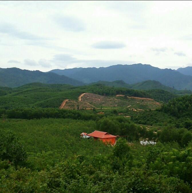 wild boar Eco Farmstay Phong Nha
